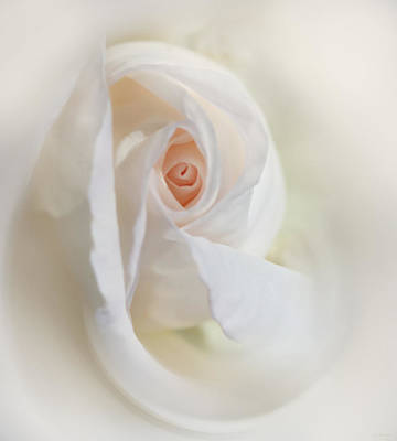 Photograph - Abstract Pastel Rose Flower by Jennie Marie Schell