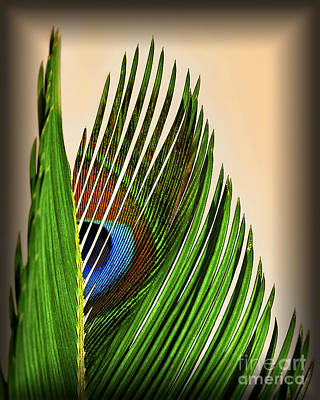 Photograph - Peacock Palm Frond by Walt Foegelle