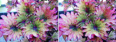 Photograph - Abstract Pretty Leaves In Stereo by Duane McCullough