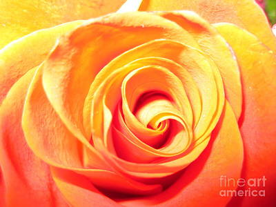 Photograph - Abstract Rose 1 by Tara  Shalton