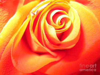 Photograph - Abstract Rose 2 by Tara  Shalton