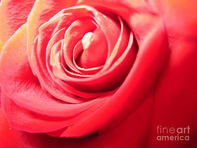 Photograph - Abstract Rose 3 by Tara  Shalton