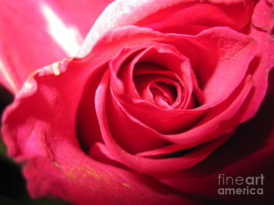 Photograph - Abstract Rose 4 by Tara  Shalton
