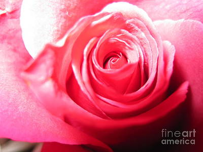 Photograph - Abstract Rose 6 by Tara  Shalton