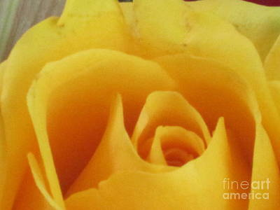 Photograph - Abstract Yellow Rose 7 by Tara  Shalton