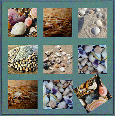 Material Digital Art - Abstract Seashells by Celestial Images