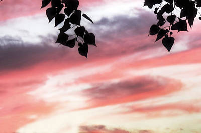Photograph - Abstract Sky by Cathy Jourdan