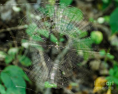 Photograph - Abstract Spider Web by Donna Brown