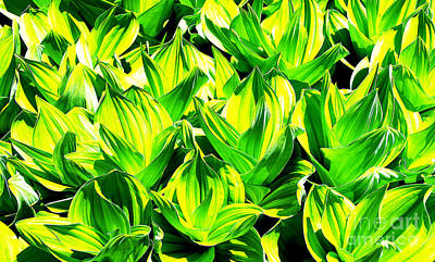 Photograph - Abstract Springtime Lush Green Corn Lilies In A Colorado Mountain Meadow by Jerry Cowart