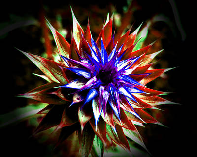 Photograph - Abstract Thistle by Pete Trenholm