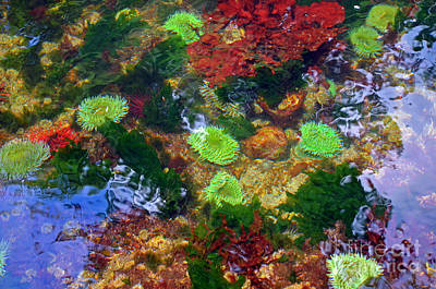 Abstract Tidal Pool Art Print