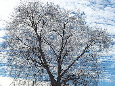 Sky Photograph - Abstract Tree - Blue Sky by Scott Cameron