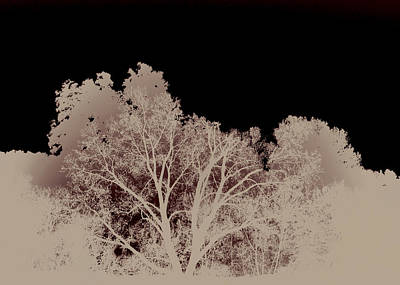 Photograph - Abstract Trees by Ann Powell