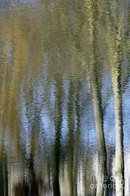 Photograph - Abstract Trees by Wendy Wilton