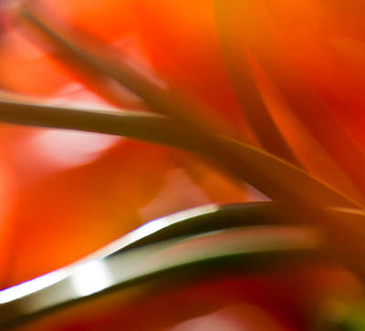 Photograph - Abstract Tulip Stems 2 by Jani Freimann