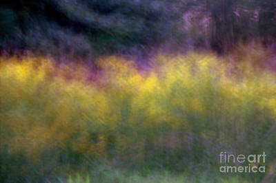 Photograph - Abstract Viii Goldenrod by A K Dayton