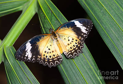 Butterfly On Leaves Art Print