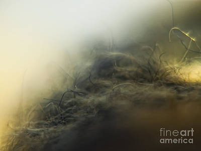 Abstract Photograph - Abstraction Earth by Justyna JBJart
