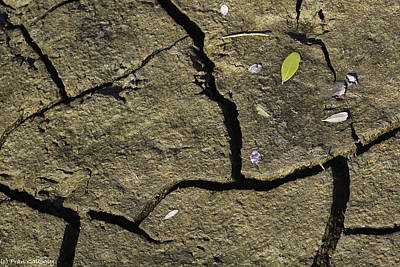 Photograph - Abstraction Of Mud And Leaves by Fran Gallogly