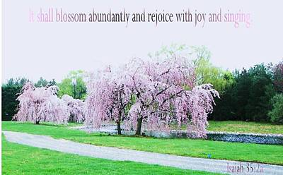 Art Print featuring the photograph Abundant Blossom by Pamela Hyde Wilson