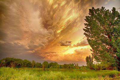 Tree Photograph - Abyss In The Sky by James BO  Insogna