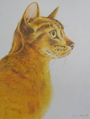 Colored Pencil Painting - Abyssinian Cat Portrait by Golanv  Waya