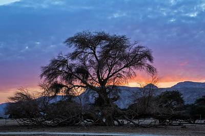 Peaceful Scene Photograph - Acacia At Sunset by Photostock-israel