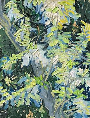 Post-impressionist Wall Art - Painting - Acacia In Flower by Vincent van Gogh