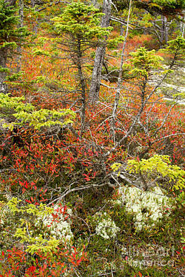 Photograph - Acadia Autumn Wonders by Chris Scroggins