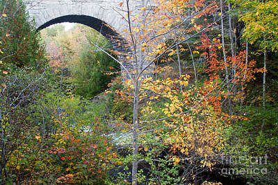 Acadia Carriage Bridge Art Print