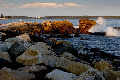 Photograph - Acadia Coast At Seawall 2800 by Brent L Ander