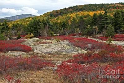Photograph - Acadia Colors by Karin Pinkham