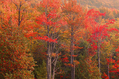 Maine Fall Colors Art Print by Stephen  Vecchiotti