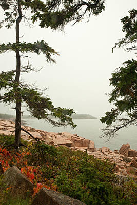 Photograph - Acadia Fog Along The Shore Path 4352 by Brent L Ander