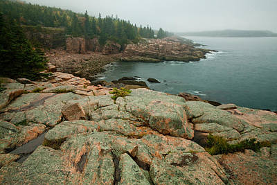 Photograph - Acadia Fog At Monument Cove 4343 by Brent L Ander