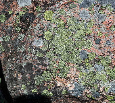 Photograph - Acadia Granite 9 by Mary Bedy