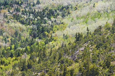 Photograph - Acadia National Park - Mount Desert Island - Forest In Spring by Keith Webber Jr