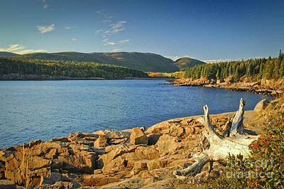 Photograph - Acadia Otter Cove by Alana Ranney