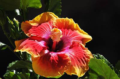 Garden Photograph - Acapulco Gold On Black by Lynn Bauer