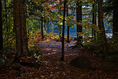 Photograph - Access To Cary Lake by David Patterson
