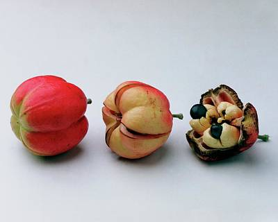 Photograph - Ackee Fruit Development by Romulo Yanes