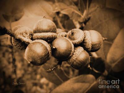 Photograph - Acorn 2 by Sally Simon