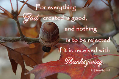 Photograph - Acorn Thanksgiving 1 Timothy 4 by Robyn Stacey