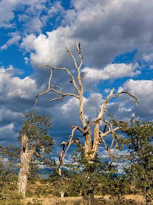 Thomas Kinkade Rights Managed Images - Acorn Tree Royalty-Free Image by Kathleen Bishop