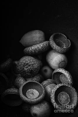 Wooden Bowls Photograph - Acorns Black And White by Edward Fielding