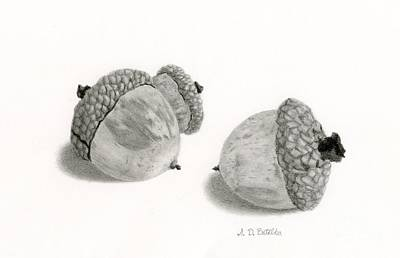 Seasonal Drawing - Acorns- Black And White by Sarah Batalka