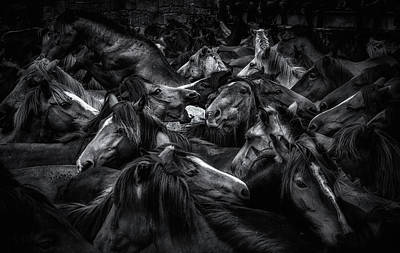 Dark Horse Photograph - Acorralados by Alfonso Maseda Varela