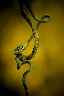 Photograph - Acrobatic Vine by Beth Akerman