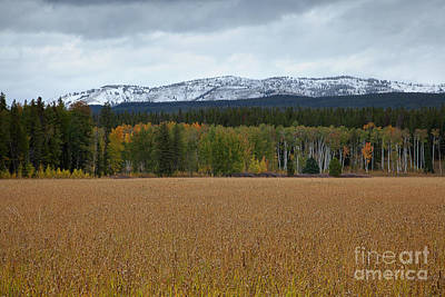 Photograph - The Layers Of Autumn by Jim Garrison