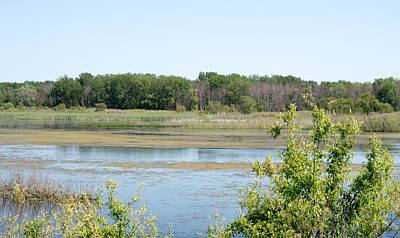 Target Threshold Nature - Across the Pond by Linda Kerkau